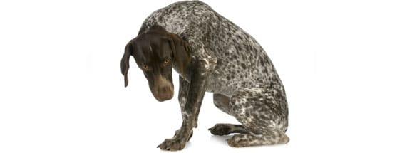 troubles-communication-peur-agressivite-chien