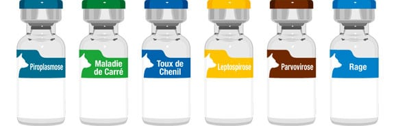 vaccin-vaccination-chien-leptospirose-parvovirose-maladie-carre-hepatite