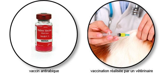vaccin_antirabique_chien_chat
