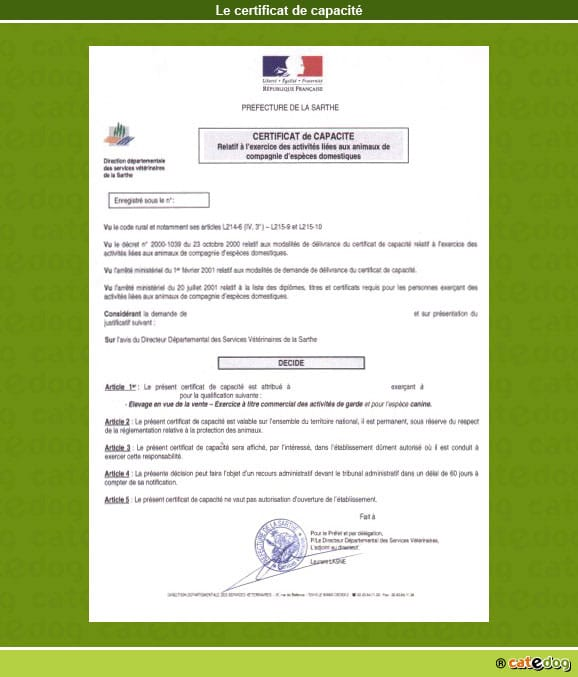 certificat-de-capacite_chien