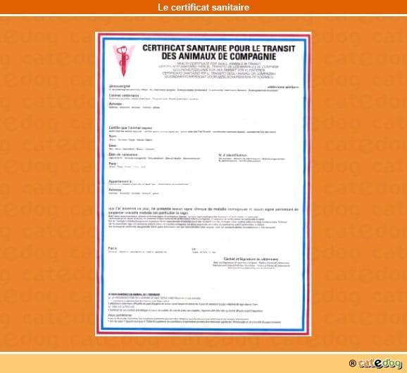 certificat-sanitaire_chat