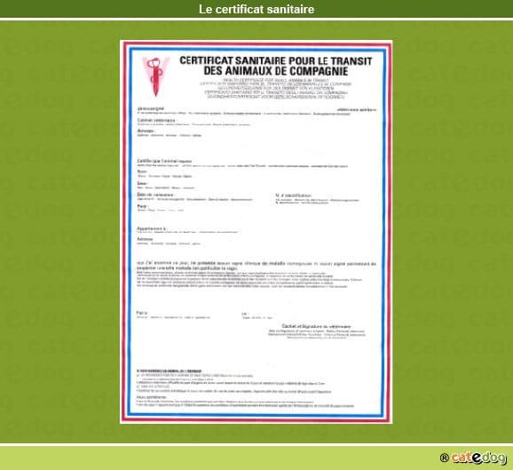 certificat-sanitaire_chien