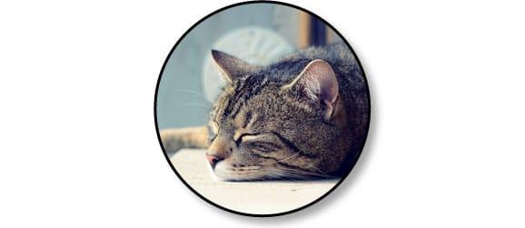 chat-dort-haut