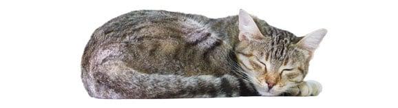 chat-dort