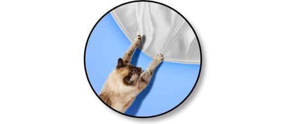 chat-grimpe-aux-rideaux