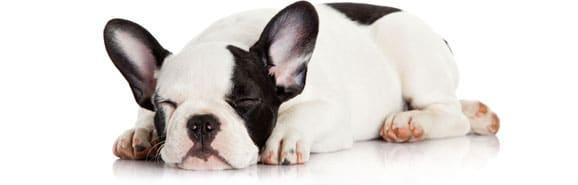 chien-dort