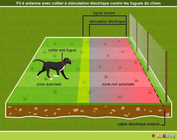 chien-fugueur-fugue-collier-impulsion-electrique