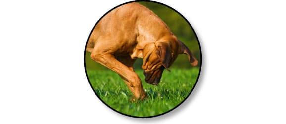 chien-gratte-herbe
