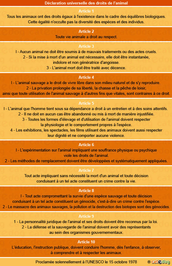 declaration-universelle-droit-animal_chat