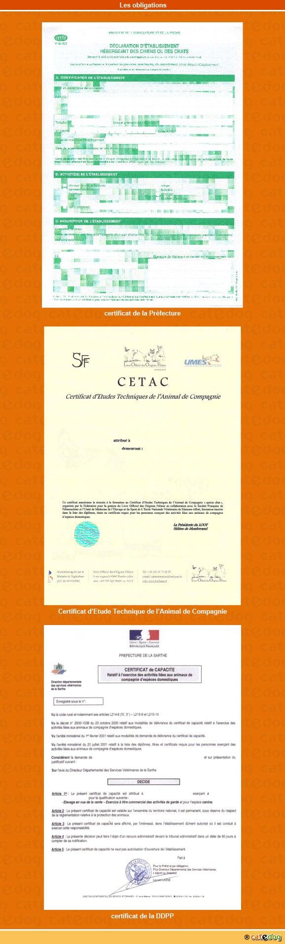 declaration_certificat_CETAC_capacite_chat