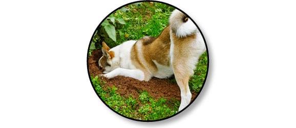 mon-chien-creuse-des-trous-jardin