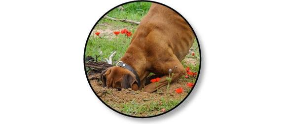 mon-chien-creuse-des-trous-partout