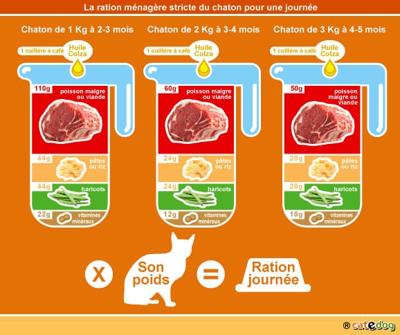 alimentation-ration-menagere-chaton