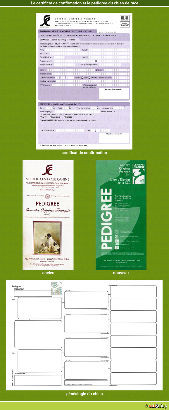 certificat-de-confirmation_pedigree-chien-de-race