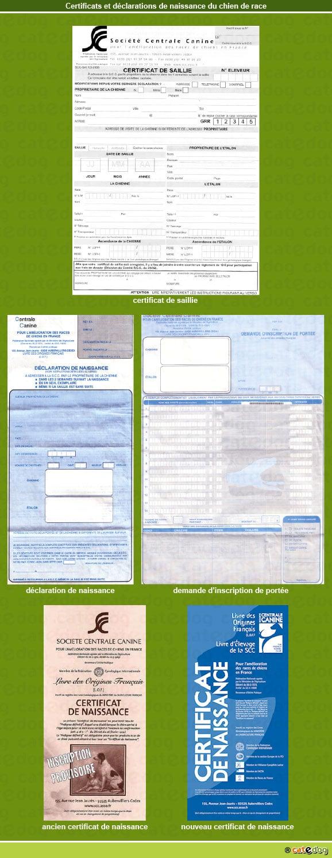 certificat-declaration-naissance_chien-race