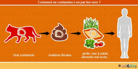 contamination-par-les-vers_chat