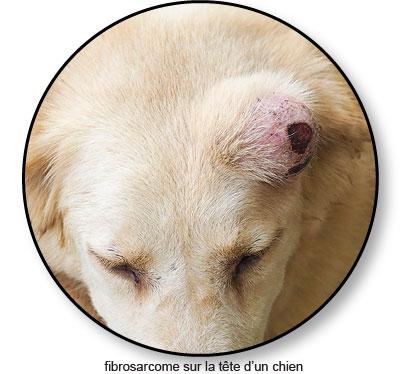 Fibrosarcome sur la tête d'un chien