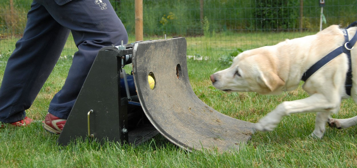 flyball-chien_2