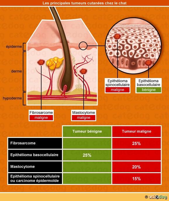 Principales tumeurs de la peau chez le chat