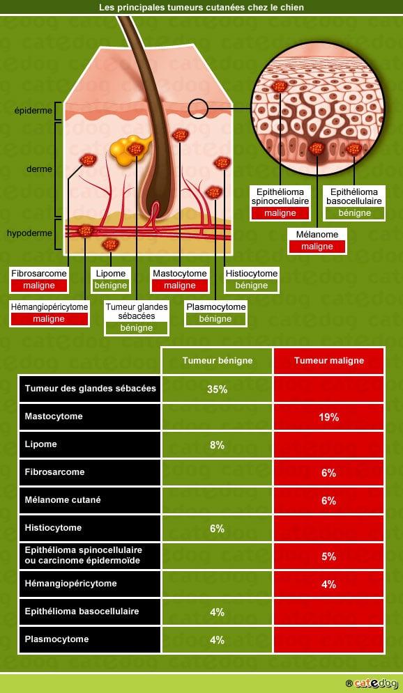 Principales tumeurs de la peau chez le chien
