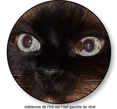 melanose-de-iris-oeil-du-chat