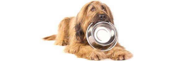 nourrir-un-chien-adulte