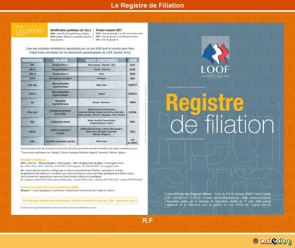 registre-de-filiation_rf_chat