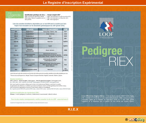registre-inscription-experimental_riex_chat
