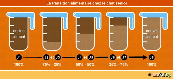 transition-alimentaire-repas-alimentation-nourrir-chat-age-senior