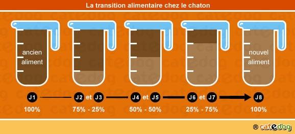 transition-alimentaire-repas-alimentation-nourrir-chaton