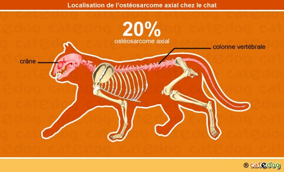 tumeur-cancer-osteosarcome-axial-chat