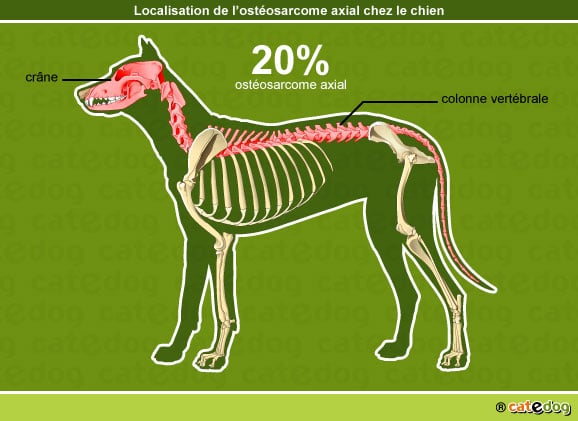 tumeur-cancer-osteosarcome-axial-chien