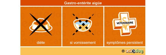 gastro-enterite-aigue_chat