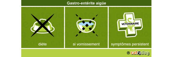 gastro-enterite-aigue_chien