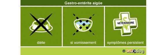 gastro-enterite-aigue_chien
