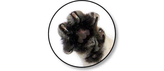 maladie-des-griffes-du-chat