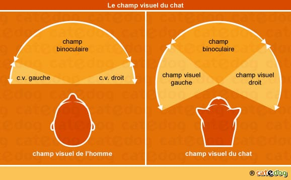 champ-visuel-du-chat
