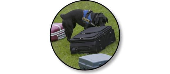 chien-douane