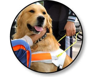 chien-guide-aveugle_catedog.com