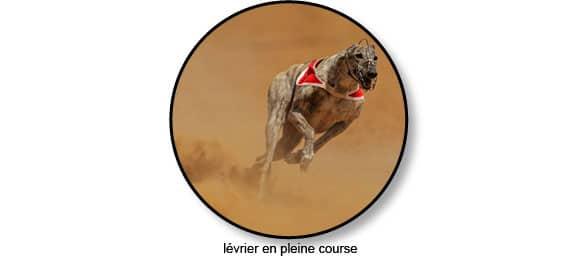 course_levrier