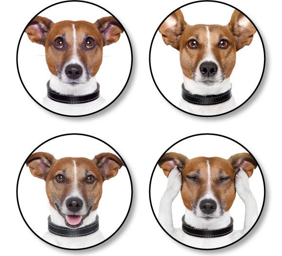intelligence-conscience-plaisir-chien