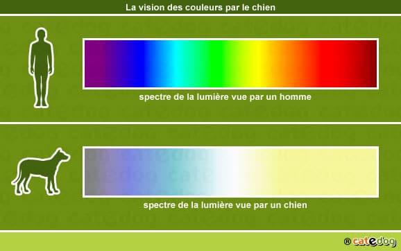 vision-des-couleurs-par-le-chien