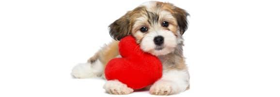 zootherapie-chien