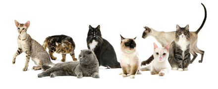 fa1bb5d0b13 Les différentes robes du chat – Conseils véto illustrés – Catedog