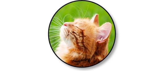 acides-gras-essentiels-chat