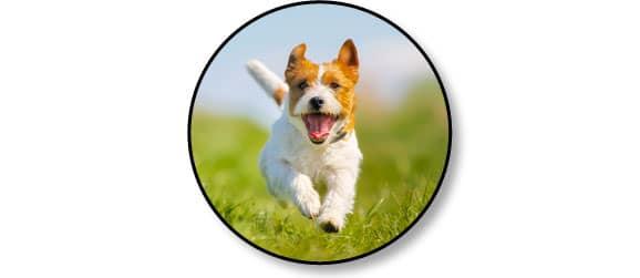 acides-gras-essentiels-chien-omega-3