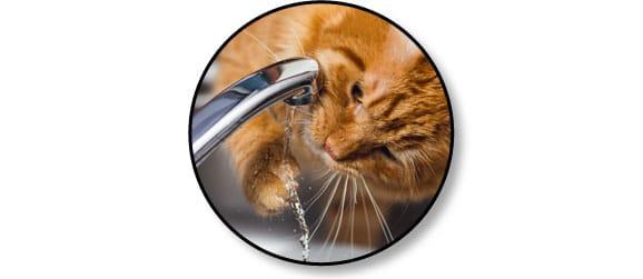 alimentation-nourrir-chat-boire-eau-robinet