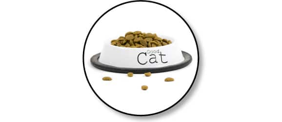 alimentation-nourrir-chat-gamelle
