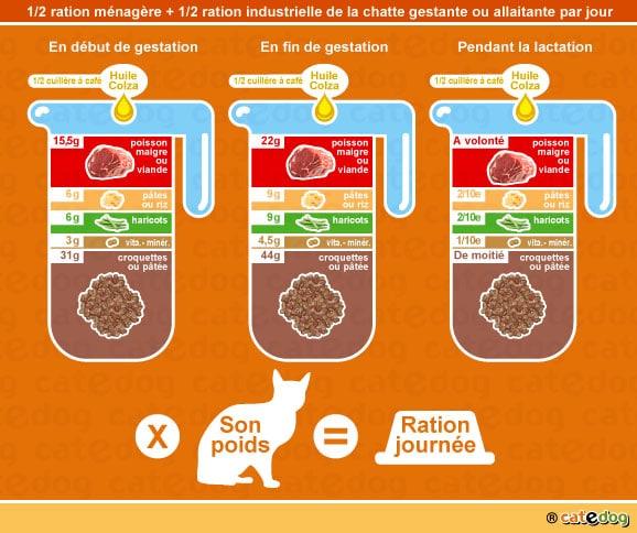 alimentation-ration-croquette-chatte-gestation-lactation