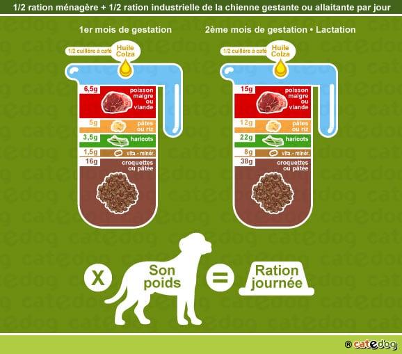 alimentation-ration-croquette-chienne-gestante-allaitante